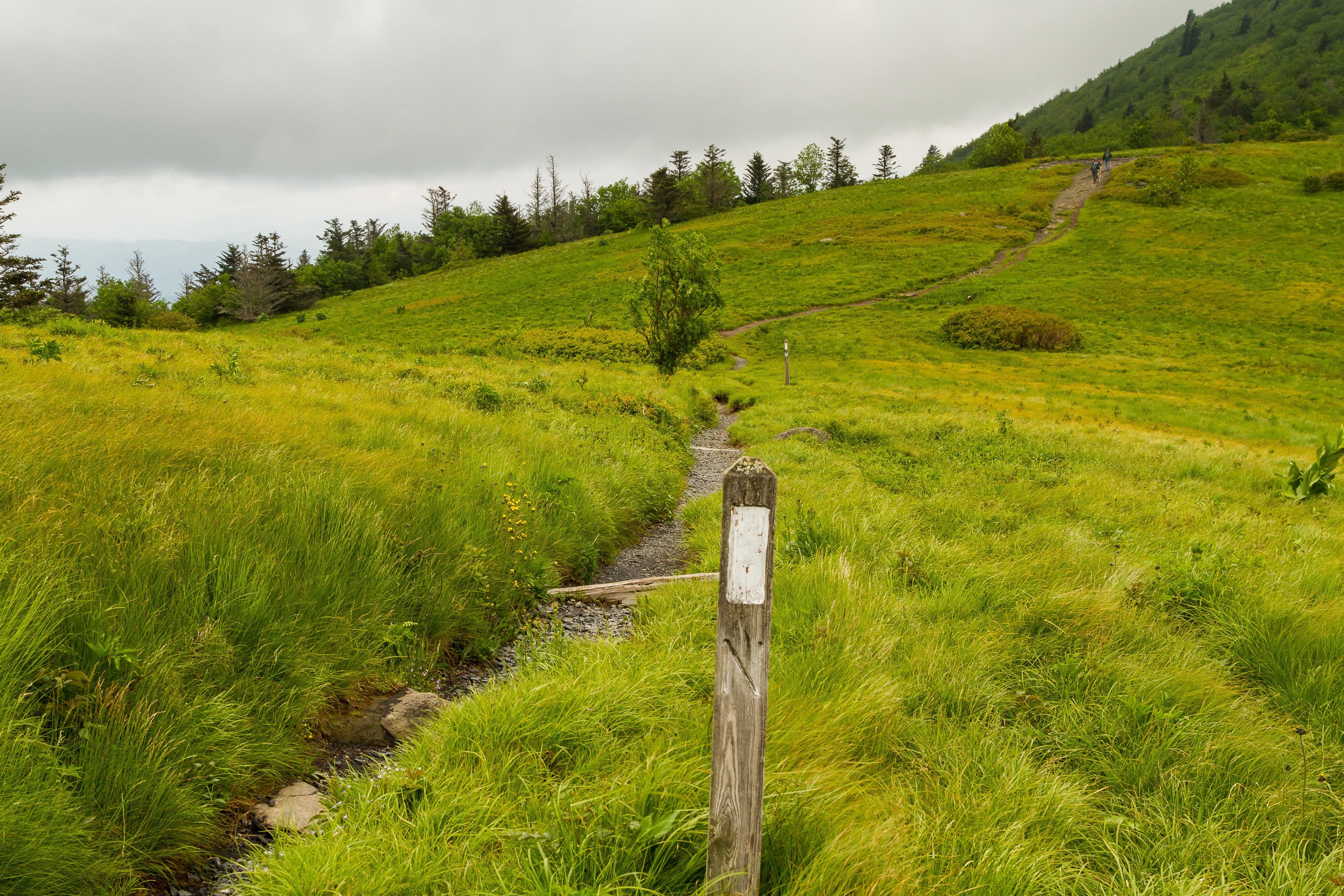 Roan Mountain 20130611-122